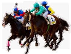 เว็บไซต์เดิมพันการแข่งม้า